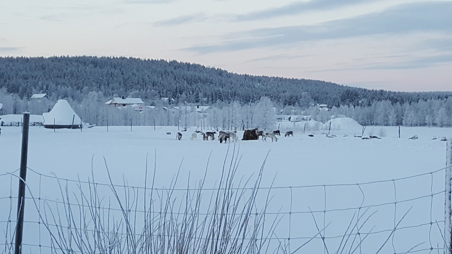 images_articles_2016_lapland_walking-on-